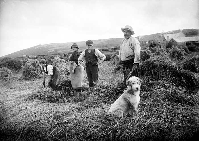 Workers making hay, Cornwall