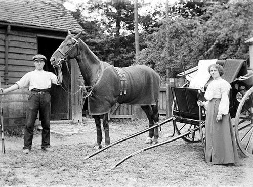 Horse and Trap, Buckinghamshire