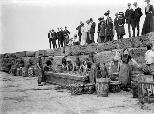 Packing fish, Scarborough, North Yorkshire