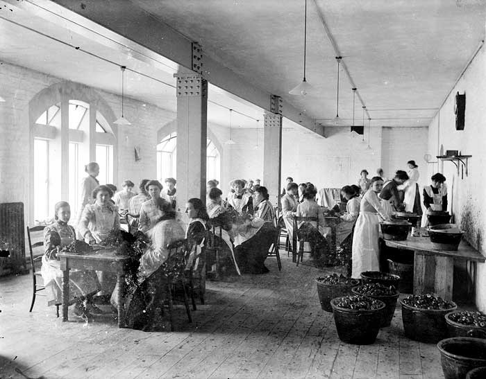 Interior showing women and girls at work.  The majority are seated at tables preparing fruit.  Others are standing at a wooden shelf to one side sieving fruit.  In the foreground are tubs of apples awaiting preparation.