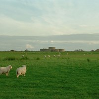 Camber Castle, Winchelsea, East Sussex