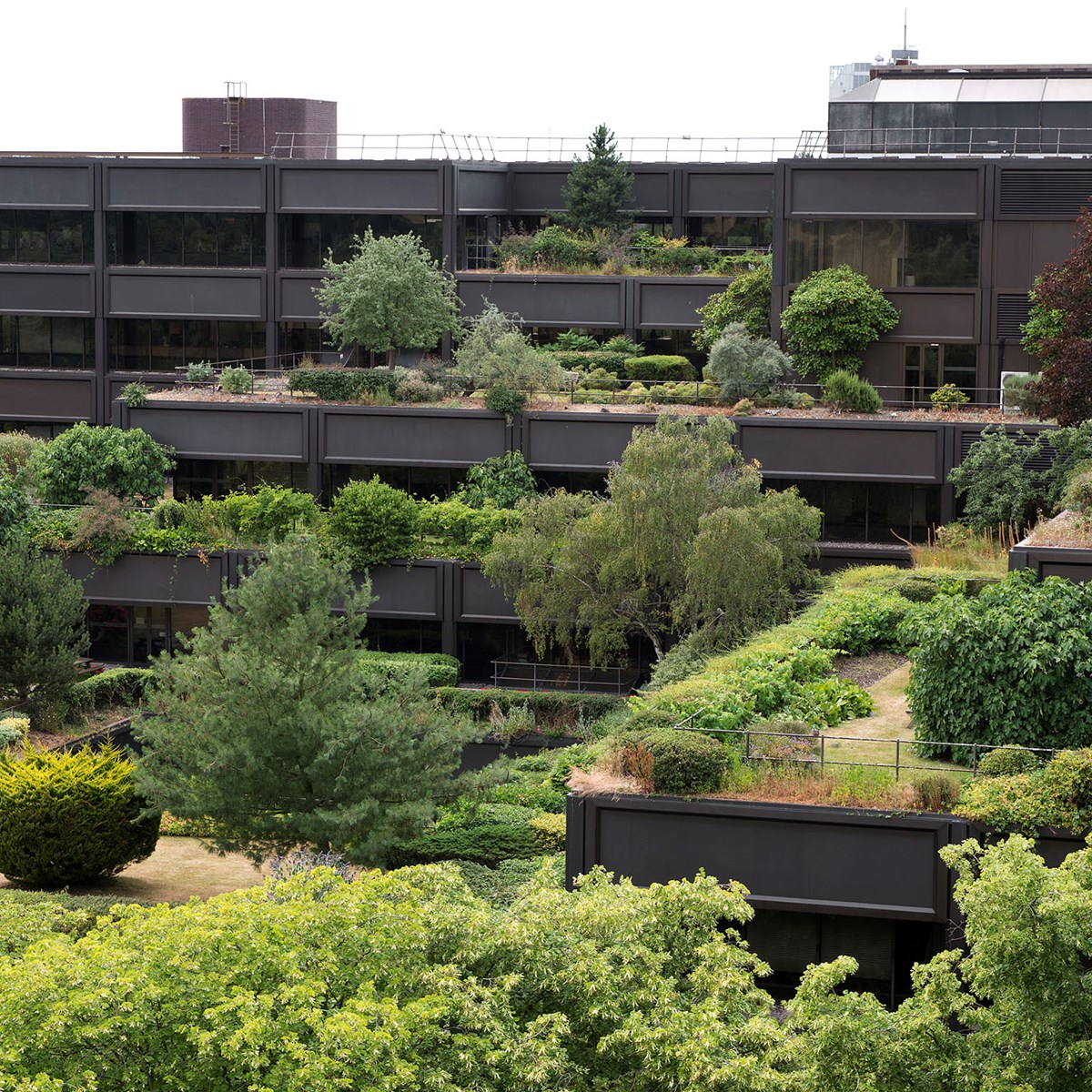 Terraced roof garden at mountbatten house basingstoke