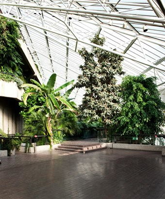 Colour photo showing the interior of the roof-top tropical conservatory of the Barbican Centre. Various large plants, including palm trees, extend under a glass roof.