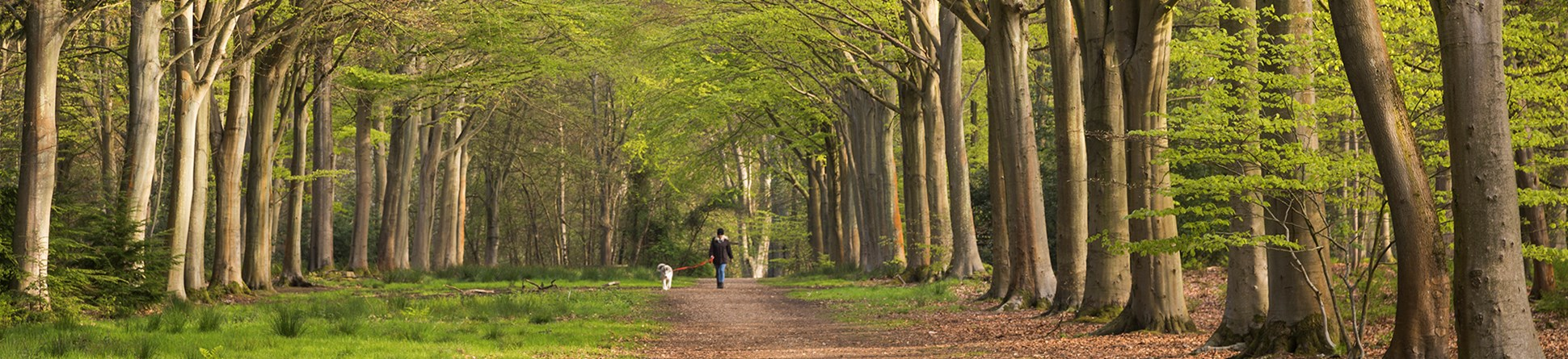Person with a dog walking along an avenue lined with trees