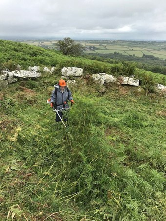 A man is strimming thick bracken. He is standing in front of a series of stones which form part of an ancient monument.