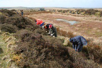 Five people are working on an earth bank, removing gorse and other vegetation