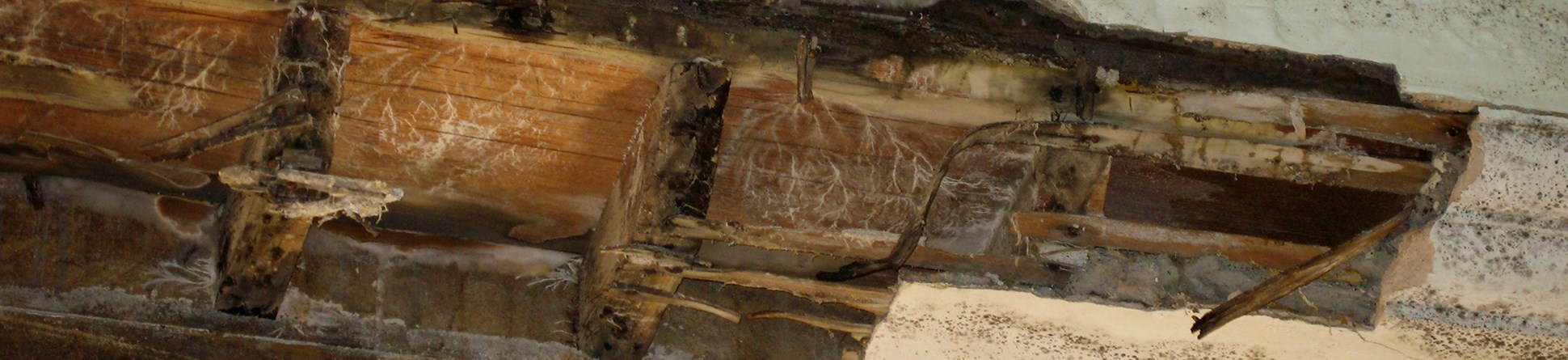 A white plaster cornice has partly collapsed, exposing the timber. Part of a wood-framed stained glass window can be seen in the foreground