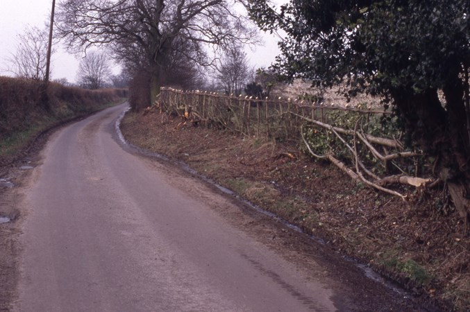 Dating hedgerows