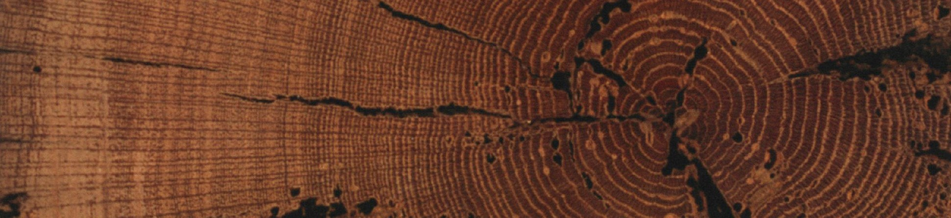 Photograph of tree trunk cross-section