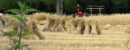 Photograph of a crop being harvested in Wiltshire
