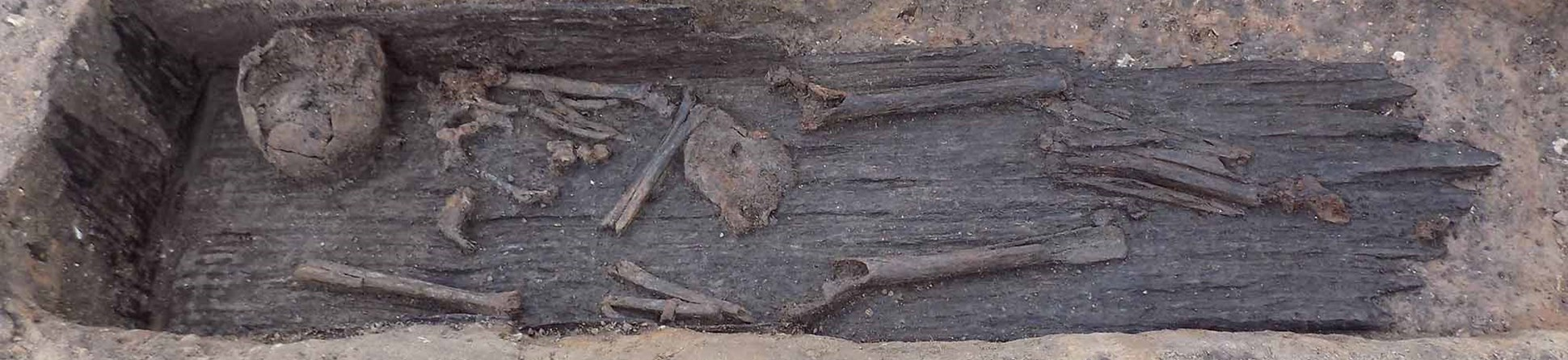 A plank lined grave with human remains